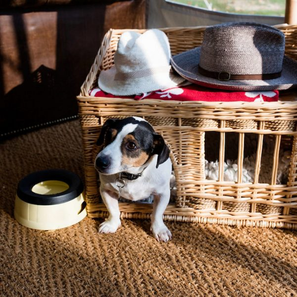 Dog ready for wedding. Outdoor wedding inspiration. Bell tent hire West Sussex